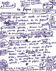 ponge_figue